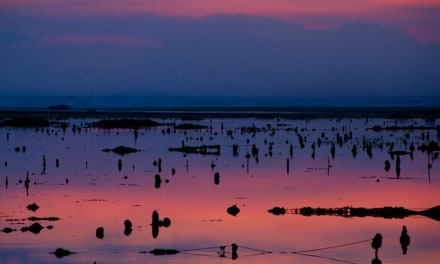 Travel Photo Of The Week: Sunset Over The Seaweed Nets – Bali, Indonesia