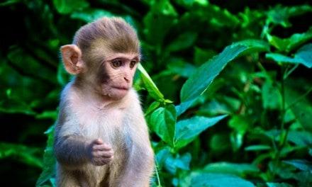 Travel Photo Of The Week: Monkeys Monkey and more Monkeys!
